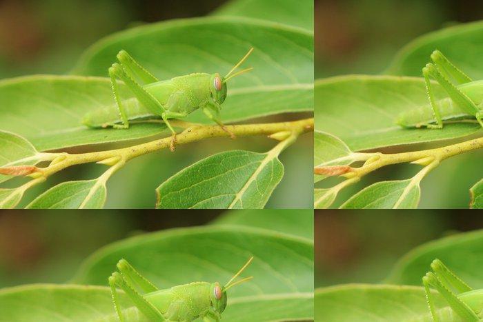 Tapeta Pixerstick Zelená kobylka - Ostatní Ostatní
