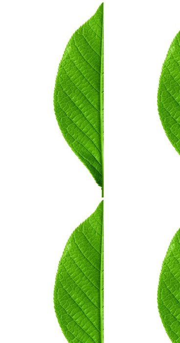 Vinylová Tapeta Zelená mladý pružina list izolovaných s vysokým rozlišením makro - Rostliny