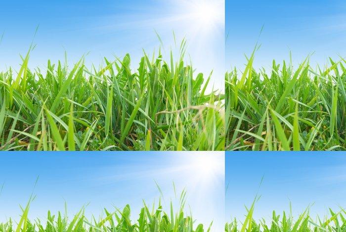 Tapeta Pixerstick Zelená tráva a slunce - Roční období