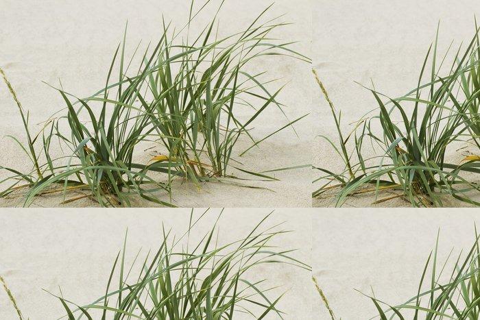 Tapeta Pixerstick Zelená tráva na písku. - Roční období