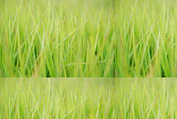 Tapeta Pixerstick Zelená tráva s teleobjektivem - Roční období