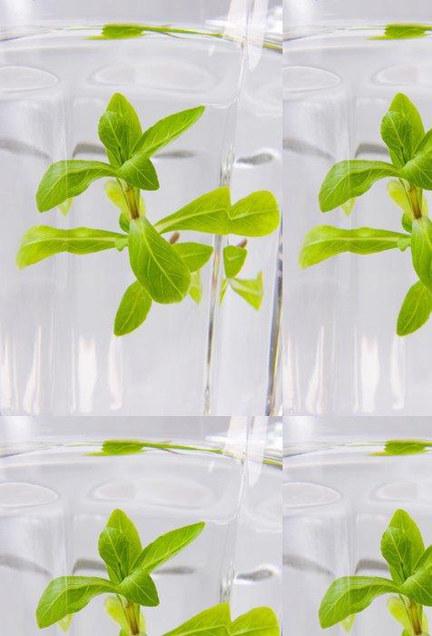 Tapeta Pixerstick Zelená voda - Alkohol