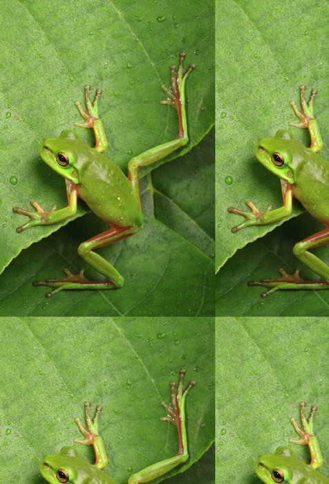 Tapeta Pixerstick Zelená žába lezení list - Ostatní Ostatní