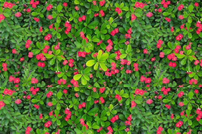 Tapeta Pixerstick Zelené listy a malý červený květ pozadí - Květiny
