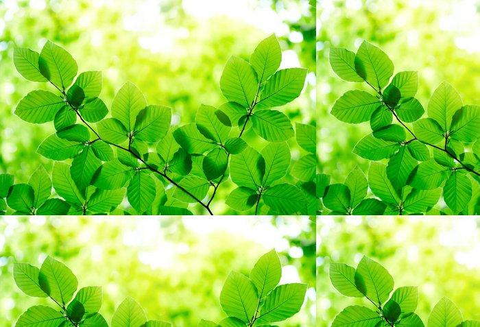 Tapeta Pixerstick Zelené listy pozadí - Stromy