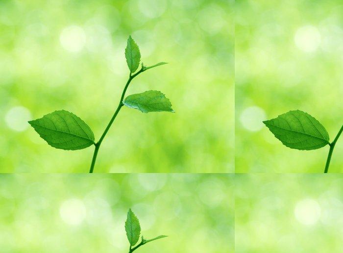 Tapeta Pixerstick Zelené listy s přirozeným - Témata