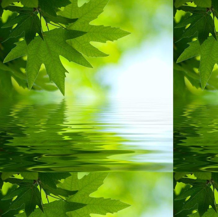 Tapeta Pixerstick Zelené listy se odrážejí ve vodě, mělké zaměřením - Rostliny