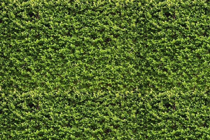 Tapeta Pixerstick Zelené listy zeď na pozadí - Roční období