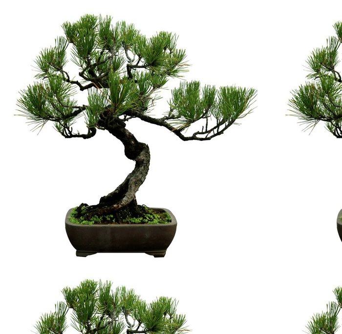 Vinylová Tapeta Zelené rostliny v květináčích na bílém pozadí. - Stromy