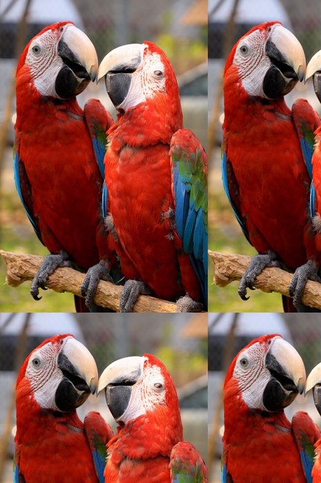 Tapeta Pixerstick Zeleno-okřídlený papoušek - Témata