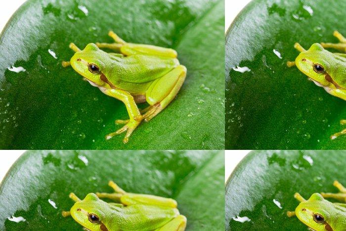 Tapeta Pixerstick Zelený strom žába na listu zblízka - Ostatní Ostatní