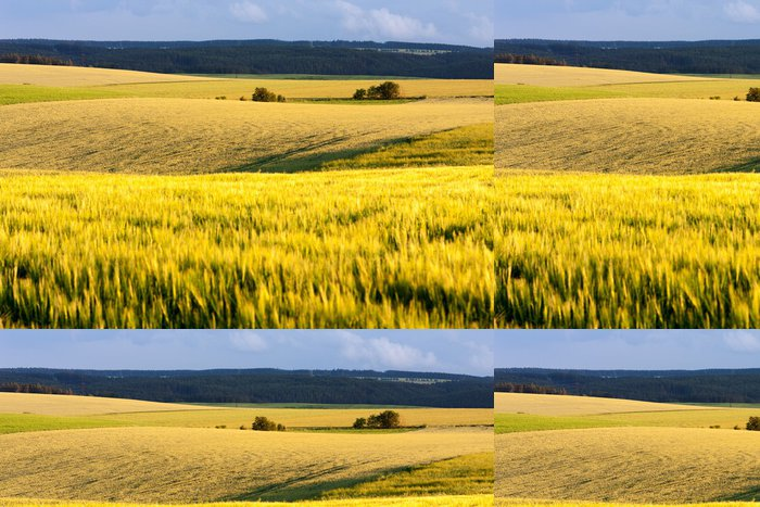 Tapeta Pixerstick Zemědělská krajina jižní Moravy, Česká republika. - Jídla