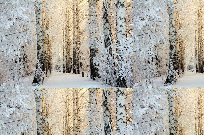 Vinylová Tapeta Zimní bříza lesy v ranním světle - Témata