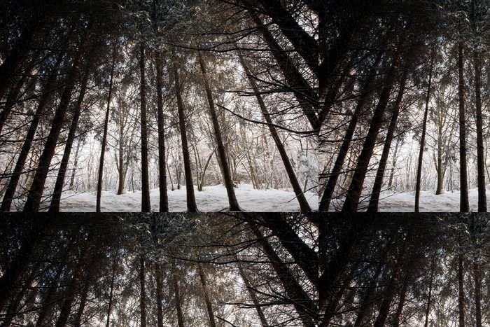 Tapeta Pixerstick Zimní les - Příroda a divočina