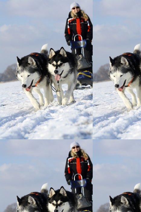 Tapeta Pixerstick Zimní sporty psích spřežení - Savci