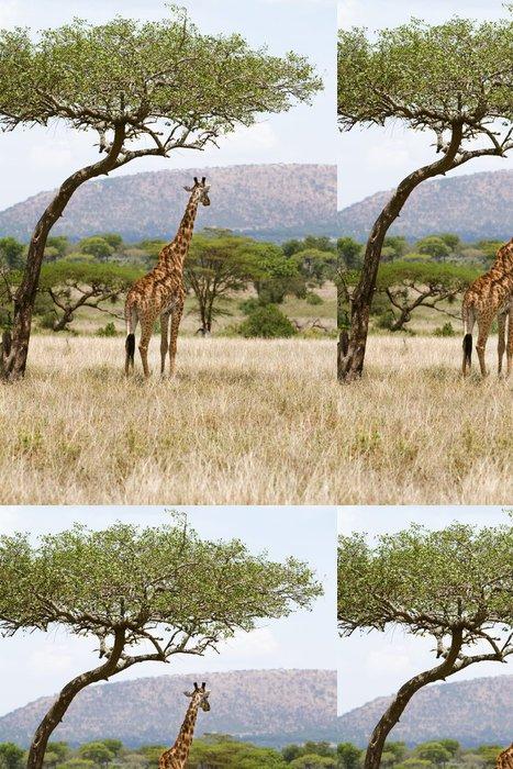 Tapeta Pixerstick Žirafa pod stromem v Africe - Témata