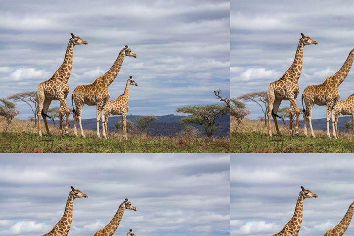 Tapeta Pixerstick Žirafy v obora - Témata