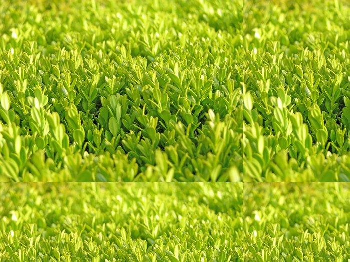Tapeta Pixerstick Živý plot - Rostliny