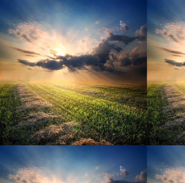 Vinylová Tapeta Zkosený poli pšenice - Roční období