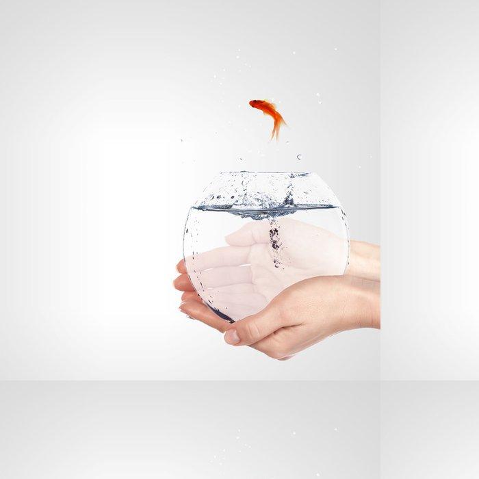 Vinylová Tapeta Zlatá rybka v misce - Vodní a mořský život