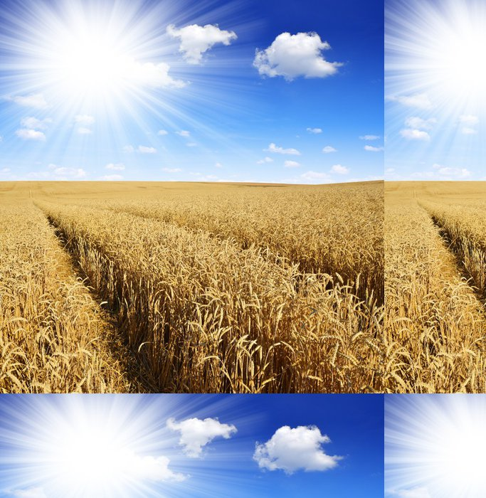 Tapeta Pixerstick Zlaté pšenice s slunečné oblohy - Zemědělství