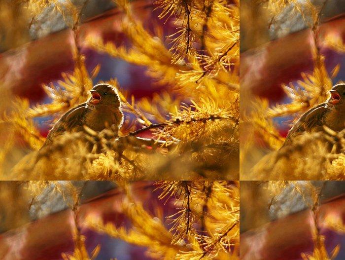 Tapeta Pixerstick Zlato vrabec - Ptáci