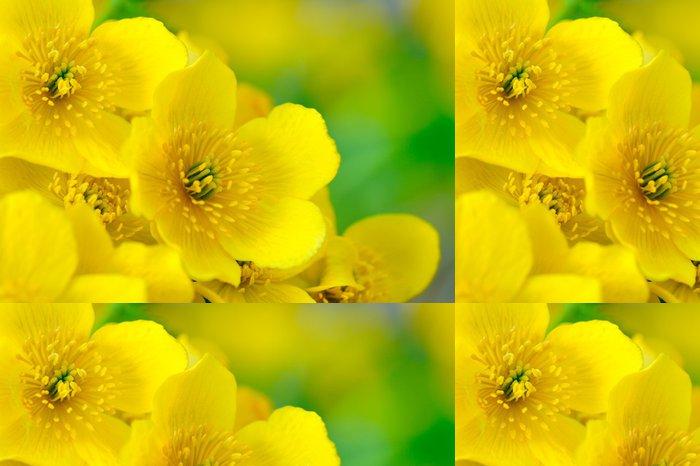 Tapeta Pixerstick Žlutá blatouch (blatouch) Květiny Makro - Květiny