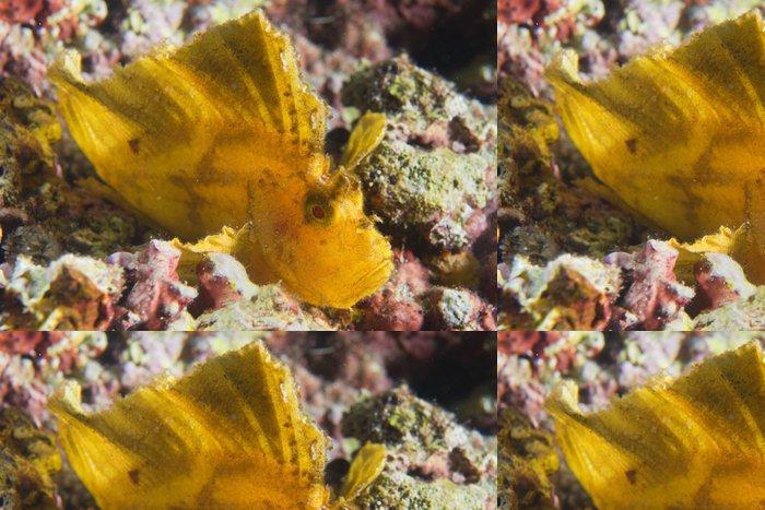 Tapeta Pixerstick Žlutá Leaf ryby v Cebu, Filipíny - Ostatní Ostatní