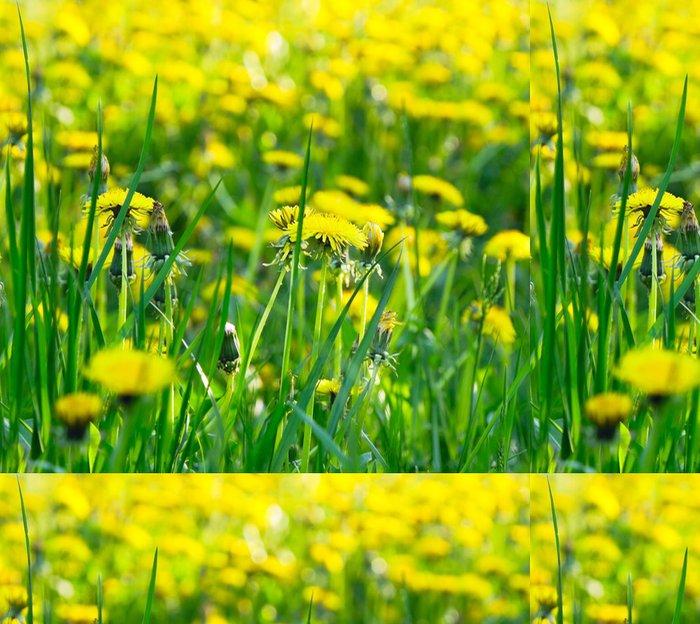 Tapeta Pixerstick Žlutá pampeliška květiny - Květiny
