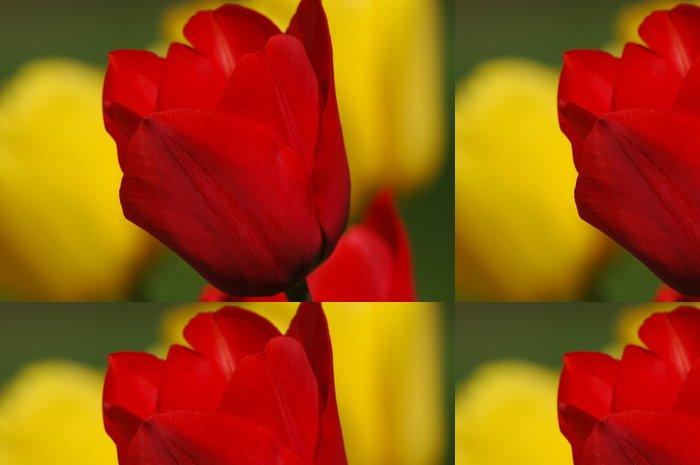 Tapeta Pixerstick Žluté a červené tulipány - Květiny