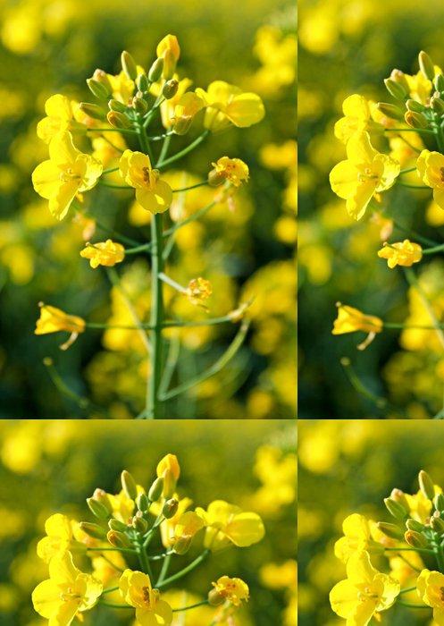 Tapeta Pixerstick Žluté květy - Roční období