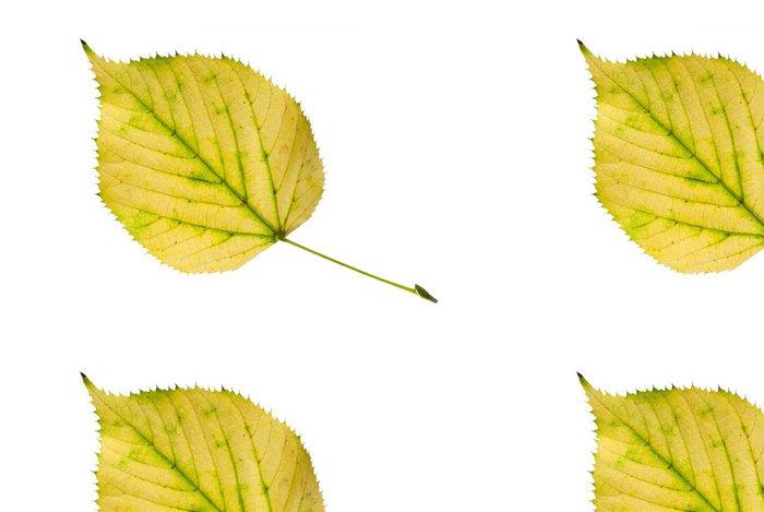 Tapeta Pixerstick Žlutý lipový lístek - na podzim se blíží. - Roční období