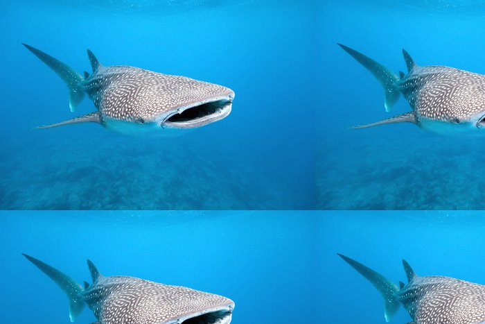 Tapeta Pixerstick Žralok - Žraloci
