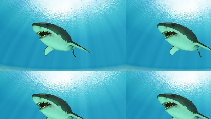 Vinylová Tapeta Žralok - Vodní a mořský život