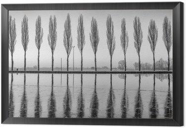 Tavla i Ram Alberi riflessi sul lago all'alba i bianco e nero