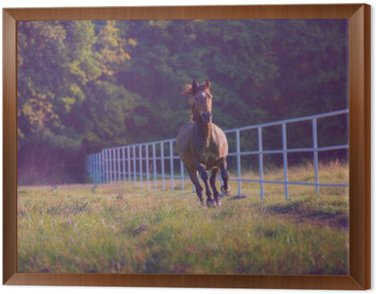 Tavla i Ram Brun häst galopperar på träd bakgrunden tillsammans vitt staket på sommaren