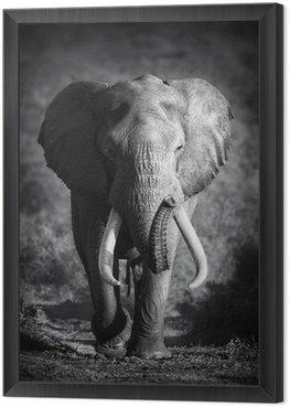Tavla i Ram Elefant Bull (Konstnärlig bearbetning)