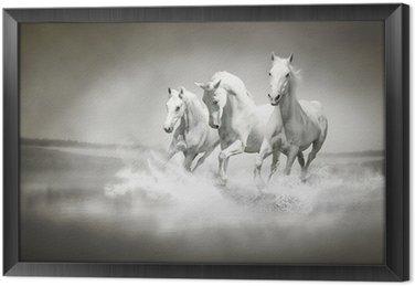 Tavla i Ram Flock vita hästar som löper genom vatten