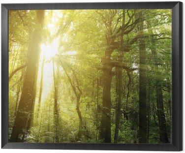 Tavla i Ram Forest ljus