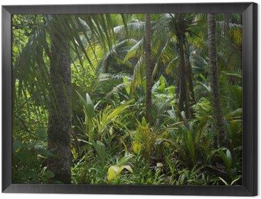 Tavla i Ram Frodig tropisk djungel Rain Bakgrund