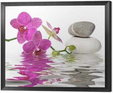 Tavla i Ram Helt enkelt vackra orkidéer