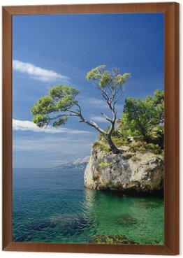 Tavla i Ram Kända vackra berg med tallar i Brela i Kroatien
