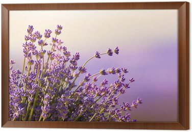 Tavla i Ram Lavendel blommor blomma sommartid