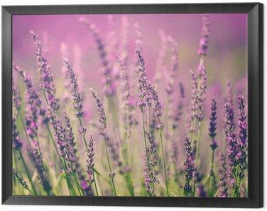Tavla i Ram Lavendelblomma