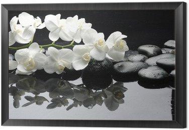 Tavla i Ram Närbild vit orkidé med sten vattendroppar