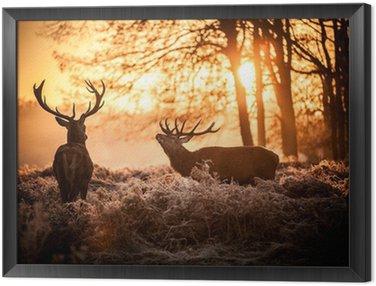 Tavla i Ram Red Deer i morgonsol.