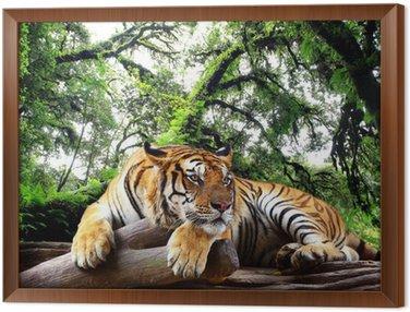 Tavla i Ram Tiger ser något på berget i barrskog