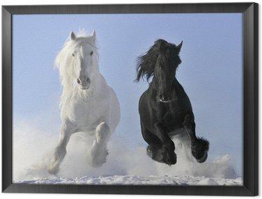 Tavla i Ram Vit och svart häst