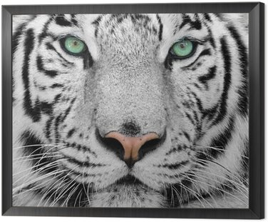 Tavla i Ram Vit tiger