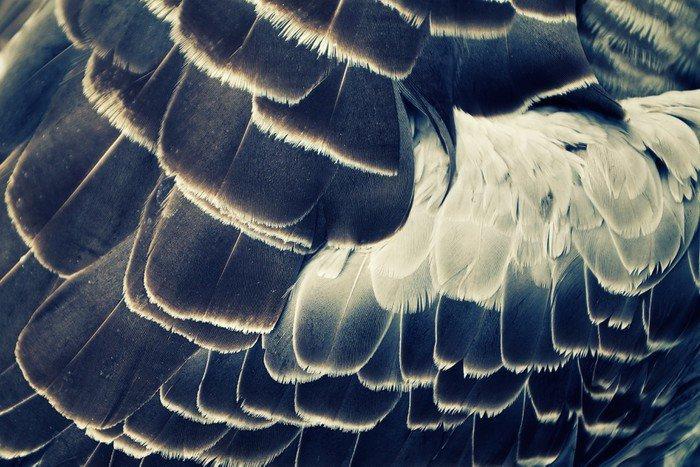 Tło upierzenie ptaka